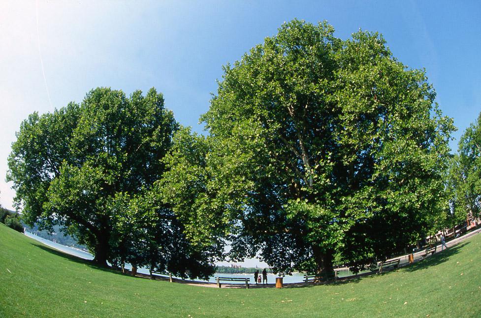 arbre_parc_c_bosson