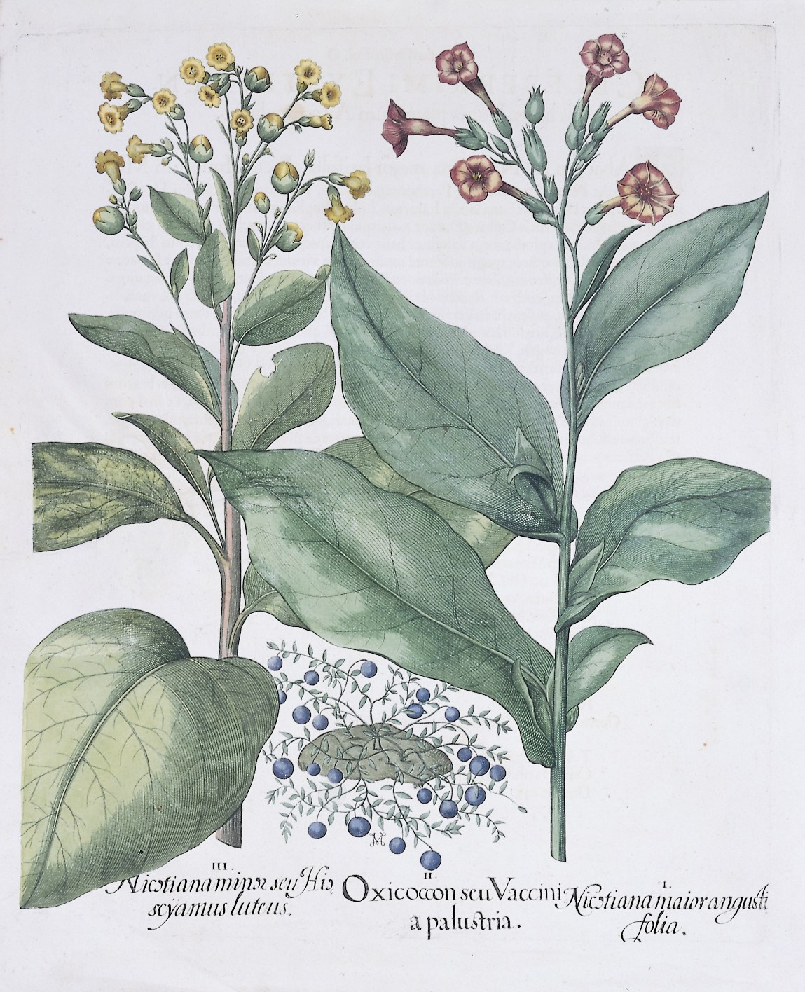 Tabakhistorische Sammlung