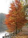 Röhrensee im Herbst