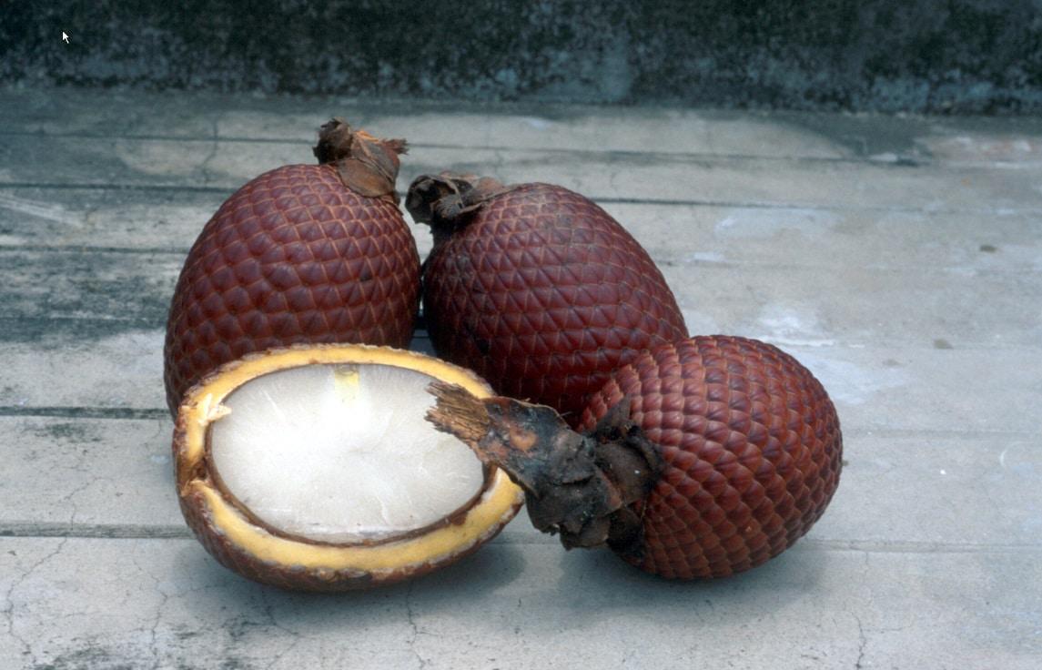 Mauritia-Früchte
