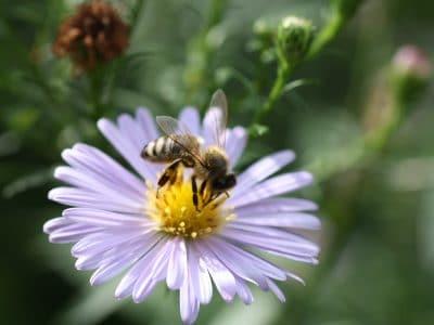Bild von lila Blume mit Biene darauf