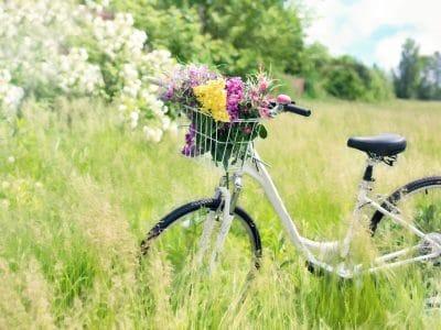 Fahrrad auf Wiese