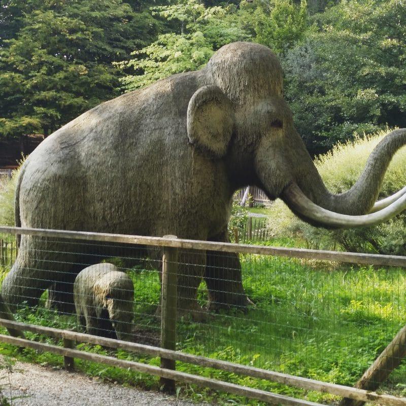 Mammuts am Röhrensee