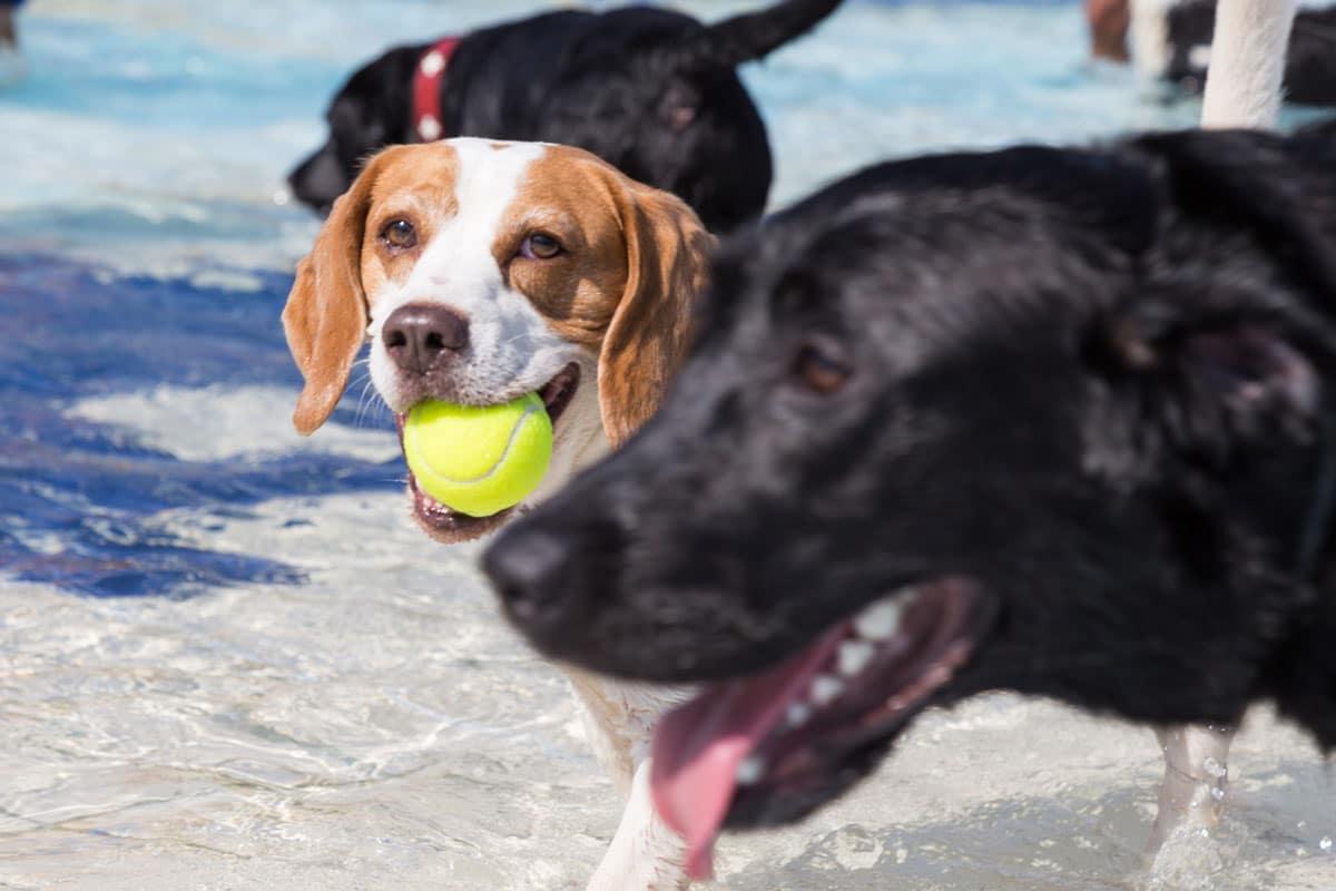 Hundebadetag im Kreuzsteinbad