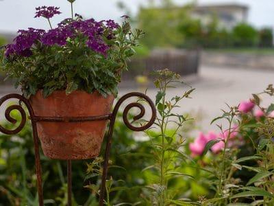 Blumentopf mit Haus dahinter