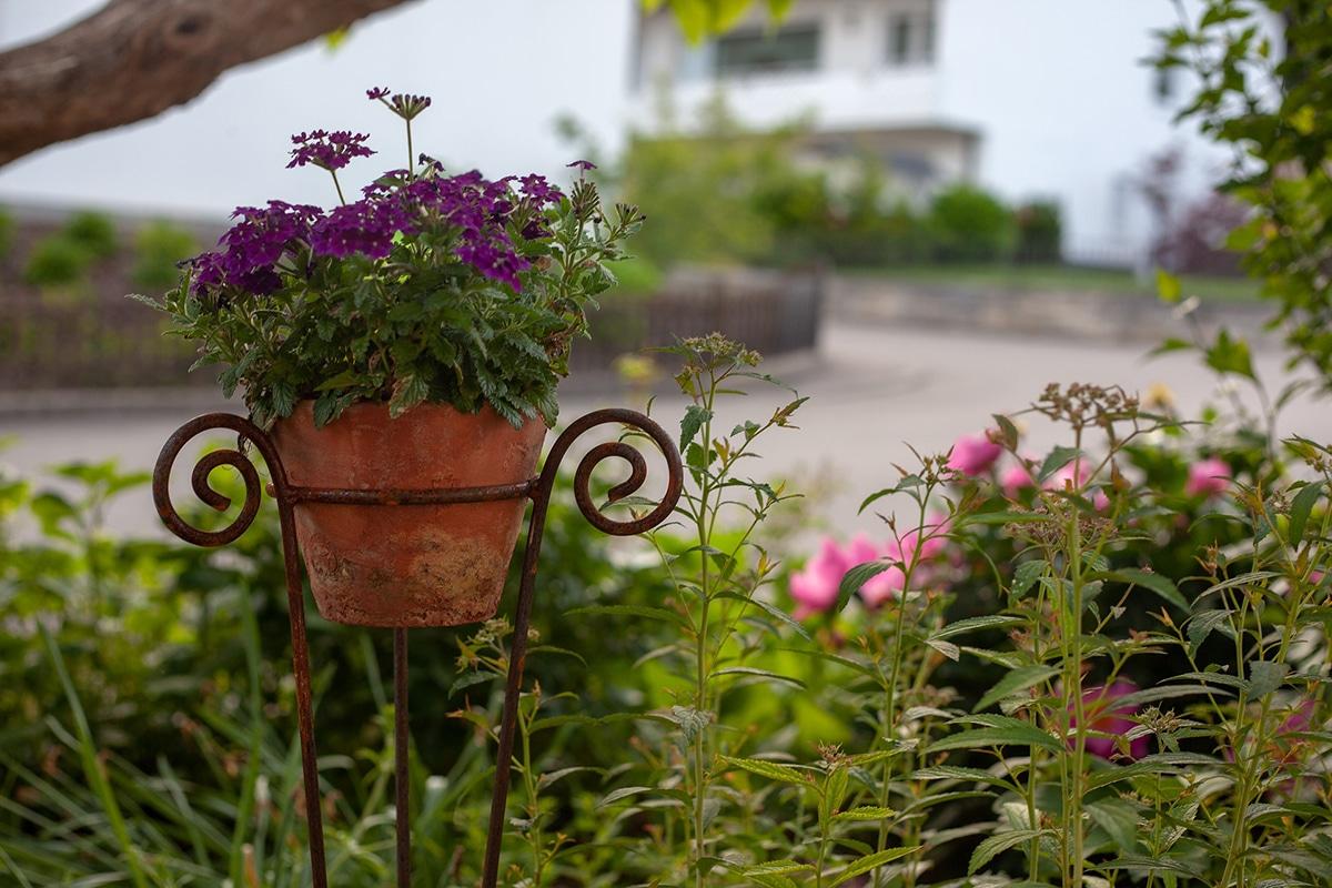 Blumentopf mit Haus im Hintergrund