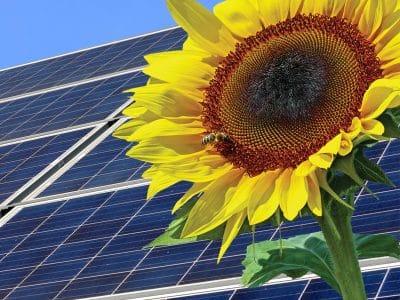 Sonnenblume vor einem Solardach